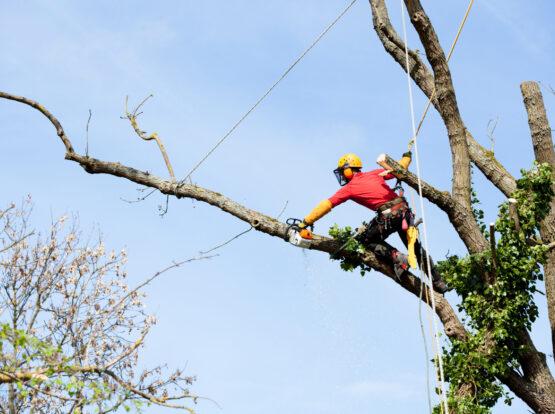 tree removal Norton ma