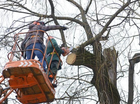 branch removal Norton ma